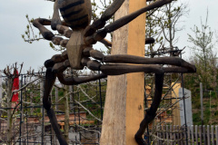 Spinnen01