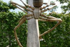Spinnen03_Juni