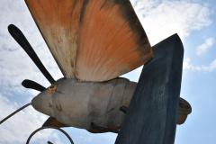 Taubenschwaenzchen01