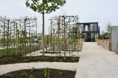 Ein Blick auf das Amberbaum-Spalier