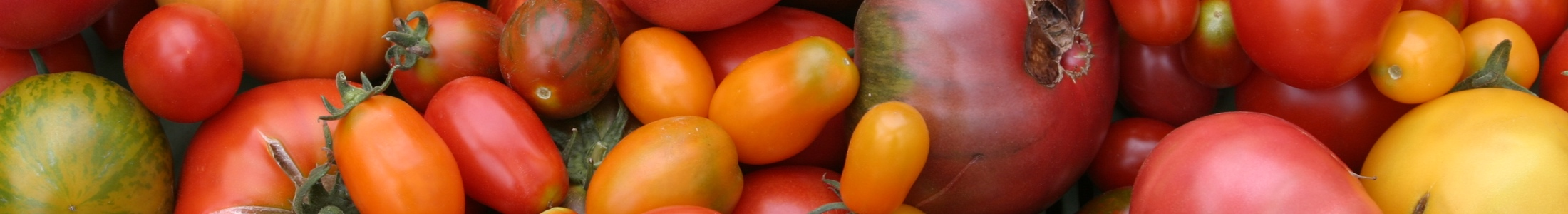 Tomatenvielfalt (Foto: Thomas Jaksch)