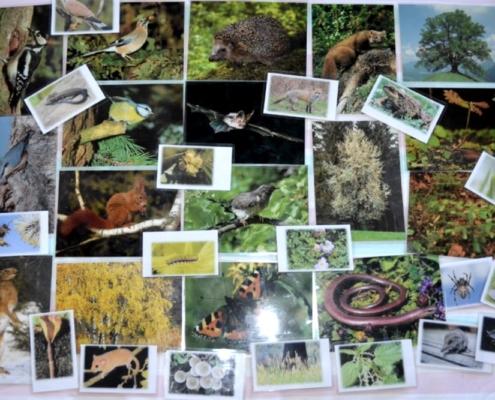 Waldkoffer Bildkarten